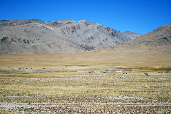 Тибетская равнина