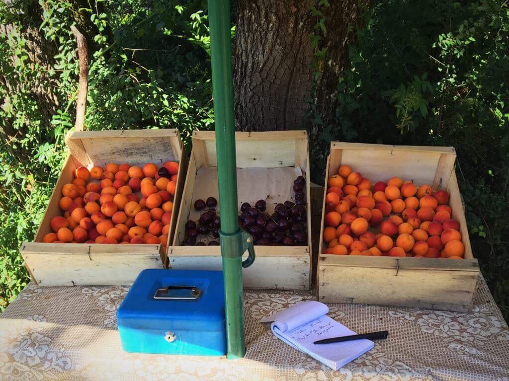 Абрикосы и черешня на пути за пожертвования