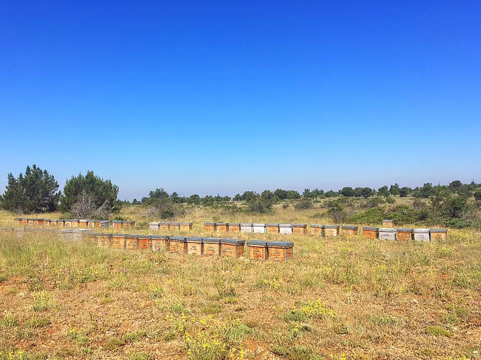 Пчелы любят разнотравье