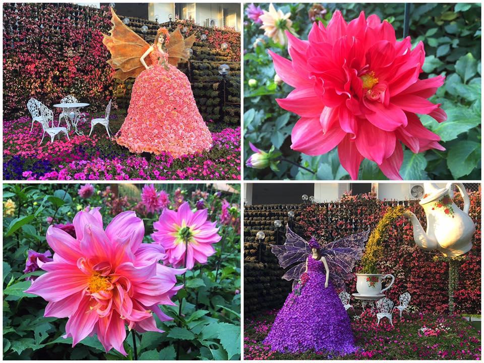 Цветочный фестиваль в Чианг Рай