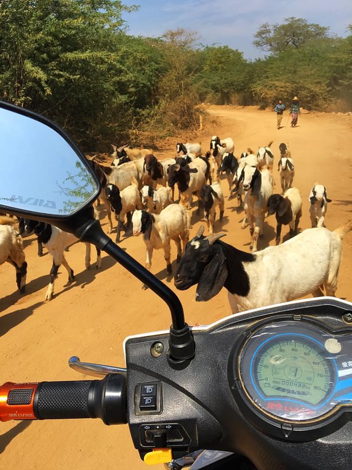 Дорогу перегородили козлы