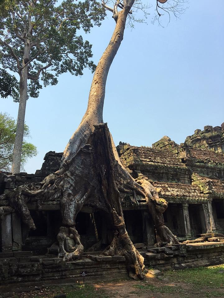 Храм Preah Khan поглощают джунгли