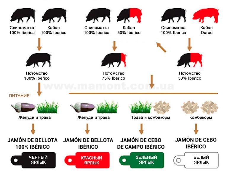 Классификация хамона. Цвета ярлыков и чистота иберийской породы свиней.