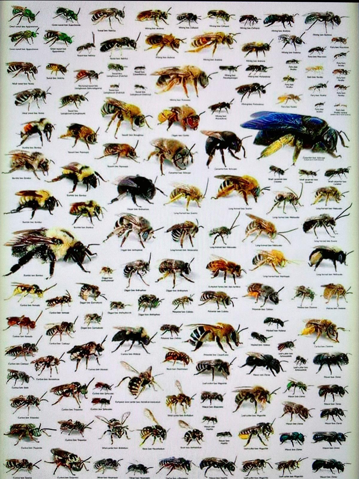 Пчелы Юкатана, Мексика