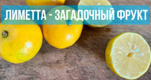 Лиметта – загадочный фрукт
